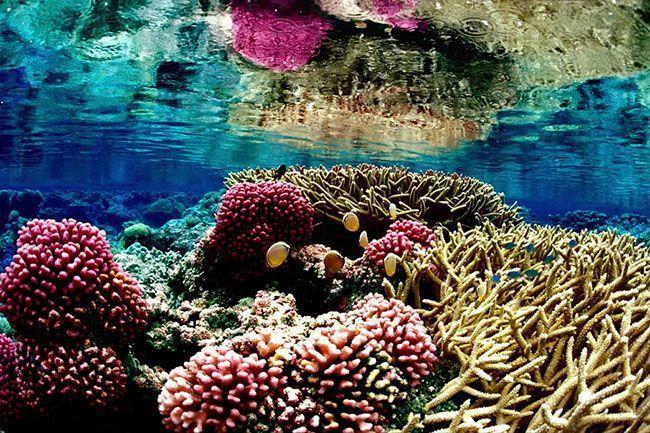tratamiento-coral